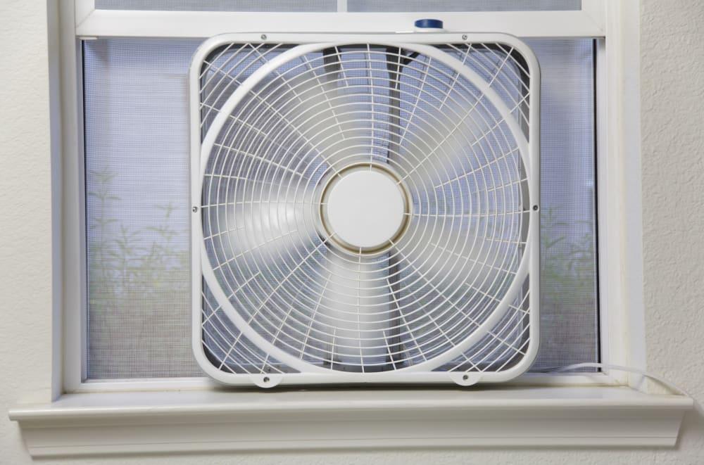 how to buy a fan