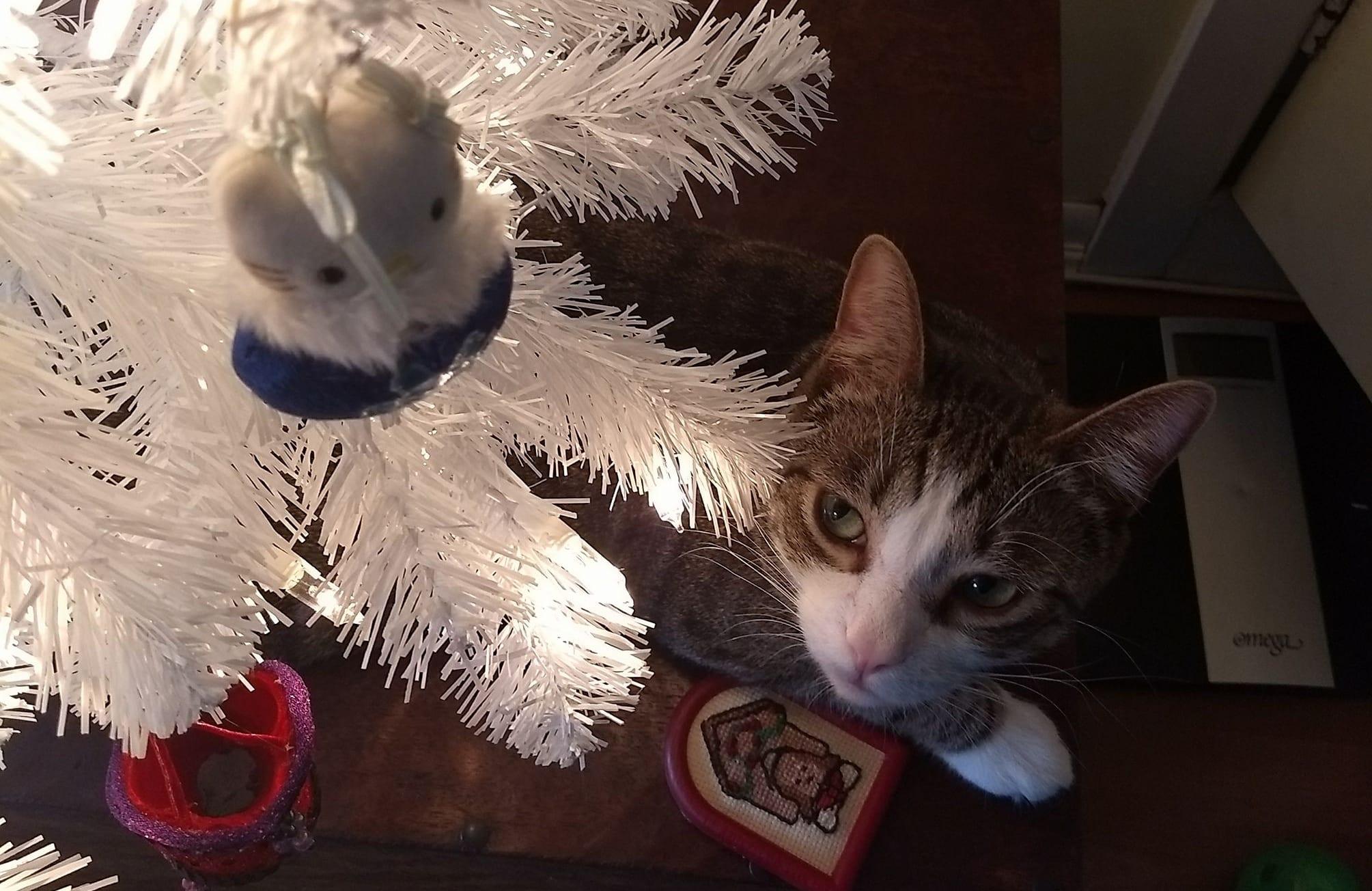 Ziggy Hates Hello Kitty