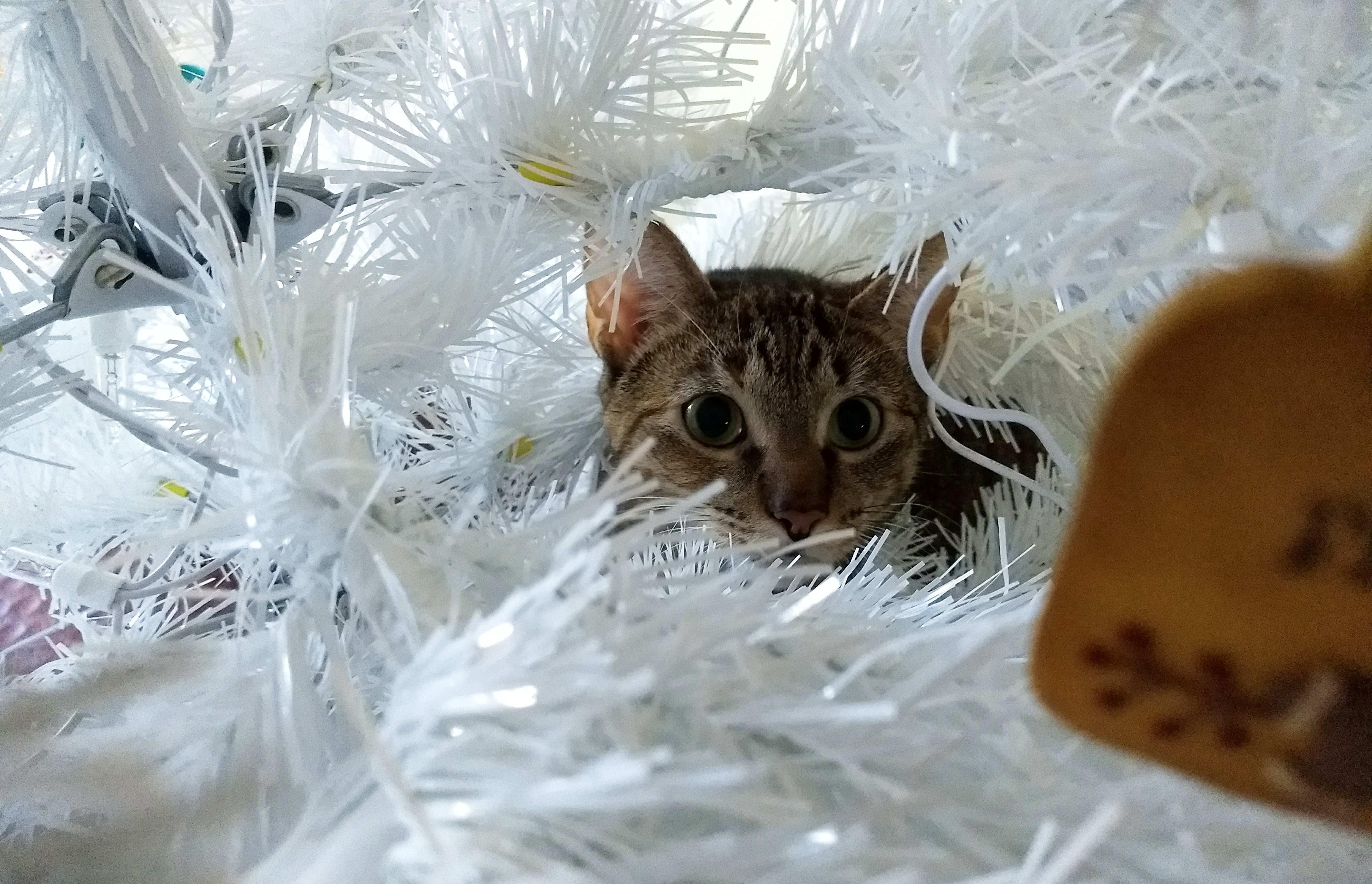 Lulu Hunting Ornament