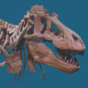 American Museum of Natural History Online Resources: Free