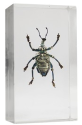 Real Bugs Insects in Resin: Extra 50% off, deals from $2 + $3 s&h