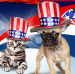 PetFoodDirect Memorial Day Sale: Up to 50% off + 15% off $49, more