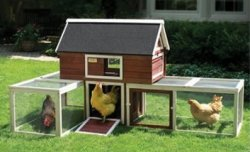 Chicken Coops at Walmart from $77