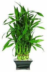 Lucky Bamboo 3-Tier Pyramid for $32