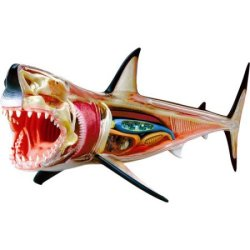 4D Vision Great White Shark Anatomy Model for $24