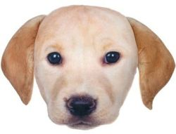 Lab Pill Plush Photo Real Pillow for $4