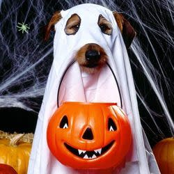 Best Halloween Deals: Up to 40% Off Pet Costumes at Target